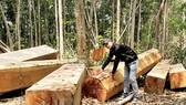 Thủ tướng yêu cầu Đắk Lắk, Quảng Nam kiểm điểm trách nhiệm để xảy ra phá rừng