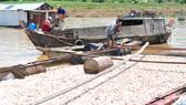 1.500 tấn cá chết trên sông La Ngà, hộ nuôi có được hỗ trợ 10 tỷ đồng như đã thiệt hại?