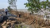 Cà Mau khẩn cấp đầu tư xây kè chắn sóng bờ biển Đông