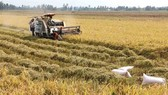 Rice husks and straw can be turned into energy (Photo: VNA)