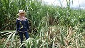 Wild elephants trampled residents' vegetables