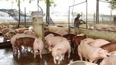 Nearly $ 1.7 million spent on animal farm wastewater treatment