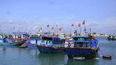 Tàu cá neo đậu cảng Lý Sơn