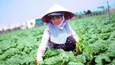 Sơ kết sản xuất trồng trọt năm 2018 các tỉnh duyên hải Nam Trung Bộ và Tây Nguyên