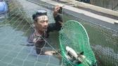 Cá chết tại cảng Dung Quất