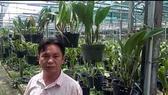 Trồng lan cattleya - mô hình phù hợp nông nghiệp đô thị