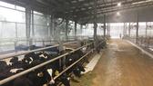 Hướng đến nền nông nghiệp hữu cơ