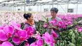 TPHCM tuyển chọn 7 giống lan mới