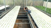 Đất sản xuất nông nghiệp: Người cần không có, người có thì… làm khó