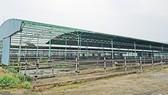 Một góc trại chăn nuôi bò của dự án chăn nuôi bò giống và bò thịt tại Hà Tĩnh do Công ty CP chăn nuôi Bình Hà thực hiện ở địa bàn huyện Kỳ Anh, tỉnh Hà Tĩnh bị bỏ hoang