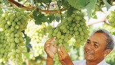 Đào tạo phát triển thương hiệu cho doanh nghiệp nông nghiệp vừa và nhỏ