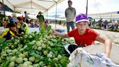 Mãng cầu Chi Lăng nhộn nhịp vào mùa thu hoạch