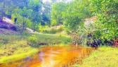 Con suối phía sau thôn Trung Tân (xã Sen Thủy) nước trong xanh  dưới thảm rừng 3 năm tuổi sau khai thác titan