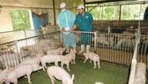 Việt Nam thắt chặt nhập khẩu thịt heo
