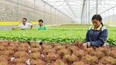Nông nghiệp 4.0 - biết chọn lọc, không ứng dụng cái gì quá sức