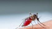 登革病毒經蚊媒傳播引起的急性蟲媒傳染病。(示意圖源:互聯網)