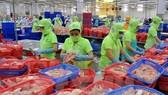 圖為魚片出口加工工段。(示意圖源:互聯網)