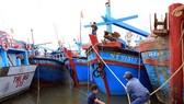 寧順省漁船回港避風。(圖源:互聯網)