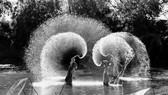 梅祿攝影師的藝術作品之一《江上舞曲》。