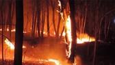 斜句自然保護區 30 公頃樹林付諸一炬。(圖源:阮進)