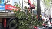 市綠樹公園管理隊主動修剪路樹。(圖源:互聯網)