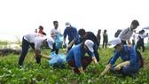 共青團員與青年在沿海收拾垃圾。