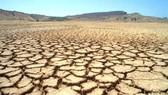 聯合國評估報告:土地退化帶來23萬億美元損失。(圖源:互聯網)