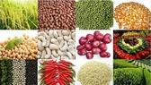 本市擬成立農產品交易平台。(示意圖源:互聯網)