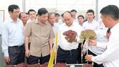 政府總理阮春福視察德仲縣聯義鎮豐翠公司的種子生產區。(圖源:光孝)
