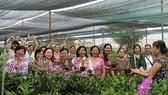 第六郡婦女代表團參觀福門縣無公害菜園。