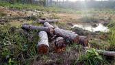 Đình chỉ công tác 15 ngày cán bộ quản lý rừng để phá 39.808m² rừng