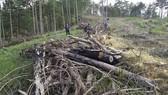 Yêu cầu kiểm tra, xử lý các vụ phá rừng tại Lâm Đồng