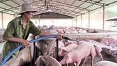"""Giá thịt heo """"nhảy múa"""", Bộ trưởng Bộ NN-PTNT trình Quốc hội dự án Luật Chăn nuôi"""