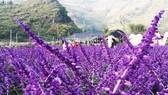 """Nhiều nơi trồng hoa để """"tự sướng"""", thu 20-30 triệu đồng/ngày"""