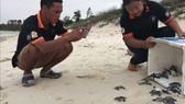 51 con rùa con tung tăng về với biển.
