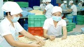 Vietnam is the world's top cashew exporter (Photo: SGGP)