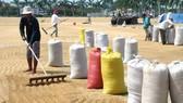 Nông dân muốn biết Bộ NN-PTNT có giải pháp nào để giữ vững đầu ra của gạo