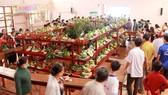 Nhiều người đến tham quan lễ hội trái ngon, an toàn tỉnh Bến Tre năm 2018, diễn ra từ ngày 15 đến 19-6, tại sân vận động huyện Chợ Lách