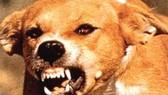 2 cháu bé tử vong vì chó dại cắn mà gia đình không hay biết