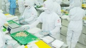 Sản xuất thực phẩm chế biến tại một doanh nghiệp có sản phẩm bán tại một siêu thị Hàn Quốc                                                                                                                                    Ảnh: CAO THĂNG