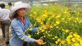 Chị Nguyễn Thị Hạ được hỗ trợ trong sản xuất đã vươn lên khấm khá