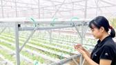 Khởi động hệ thống tưới cây tự động bằng ứng dụng Smart Agri trên điện thoại tại QTSC