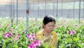 Nhân lực cho nông nghiệp công nghệ cao