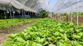 Tanifarm với ước mơ nâng tầm nông sản Việt