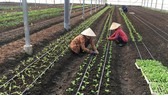 DN gặp khó khăn trong việc tìm quỹ đất để sản xuất