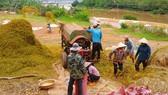 Nghị định 107 sẽ tạo điều kiện cho DN vừa và nhỏ phát triển xuất khẩu gạo