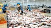 Chế biến cá tra xuất khẩu tại một doanh nghiệp thủy sản