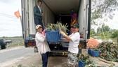 Xuất khẩu rau quả với mục tiêu 4,5 tỷ USD