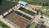 Nước thải sau xử lý tại Khu Công nghệ cao TPHCM được quan trắc kiểm tra chất lượng. Ảnh: THÀNH TRÍ