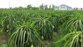Tập trung phát triển nông nghiệp công nghệ cao